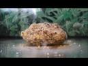 Уловистая каша на карпа и карася ПРОВЕРЕНО Тест в воде