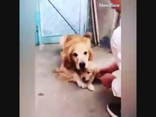 собаки, такие собаки