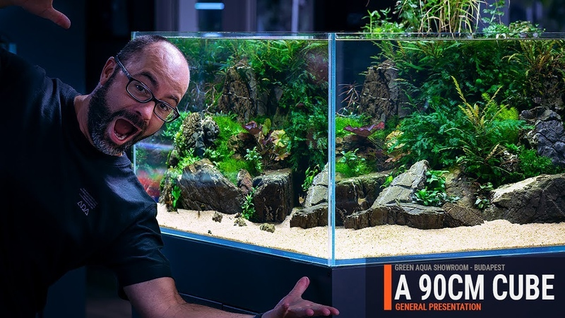 90CM CUBE PLANTED TANK WITH A SUMP FILTRATION AND EASY AQUATIC PLANTS