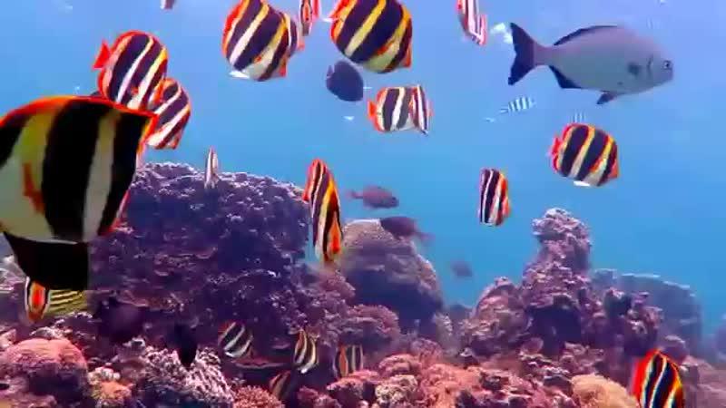 Погрузитесь на самый южный коралловый риф в мире-остров Лорд Хоу