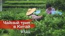 Одинокие кусты гор феникса Фен Хуан Дань Цун Чайный трип в Китай Эпизод 2