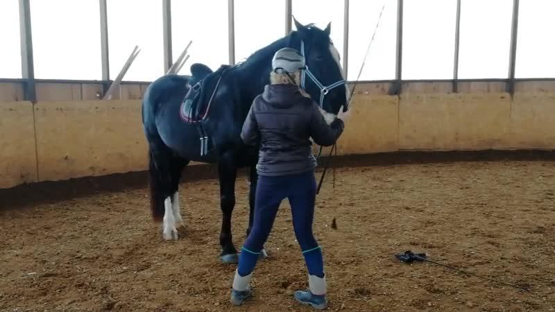 Молодая лошадь и хлыст