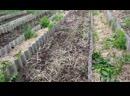 Семья Бровченко. Эксперимент - необычная посадка картошки. №1 Отбираем и садим.