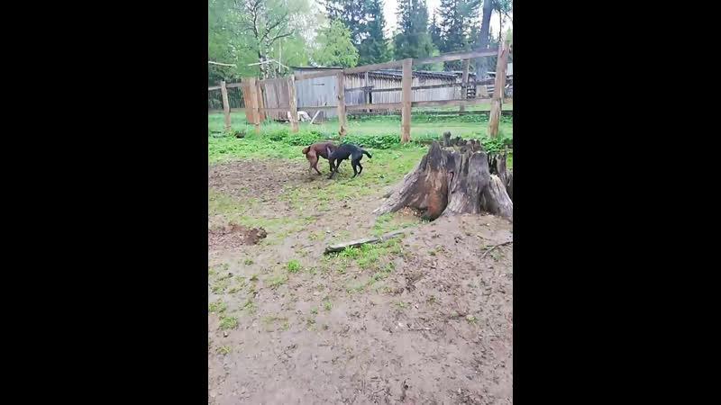 Wild dogs центр ездового Live