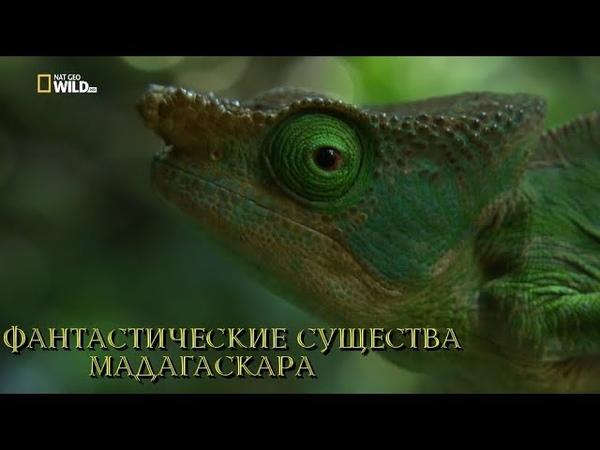 Nat Geo Wild Фантастические существа Мадагаскара 2018 (1080р)