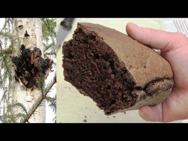 Хлеб 🍞 с чагой здоровье из природы Health from nature