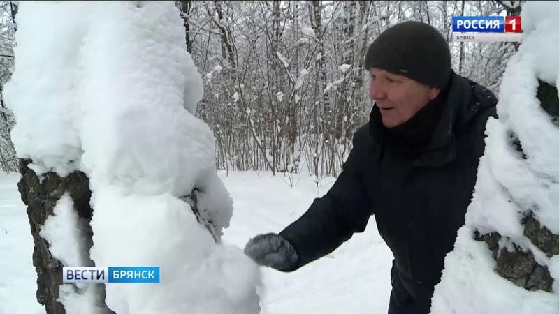 Снежные фигуры в брянском парке Соловьи