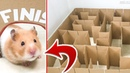 GIANT Maze Labyrinth for Syrian Hamster. Can she the EXIT?