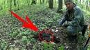 Поиск монет в лесу с металлоискателем Макро рейсер 2