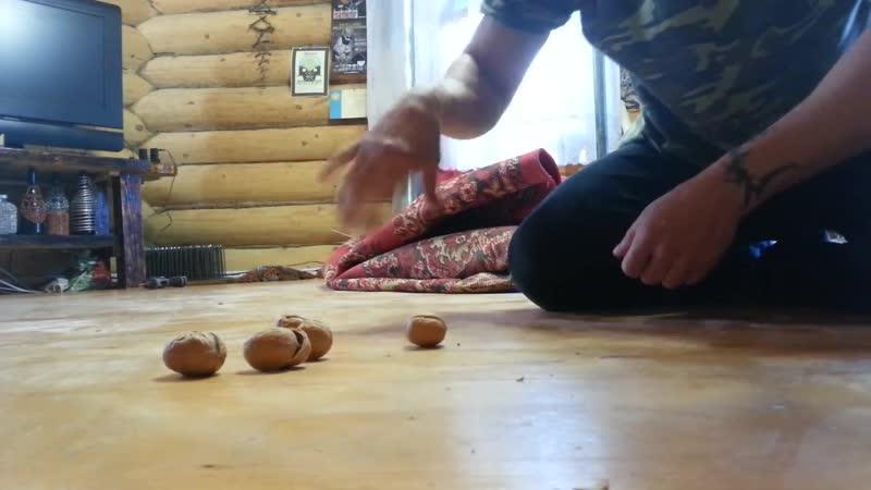 Грецкие орехи пробовал разбить пиявками