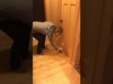 Prison cat receives his rations