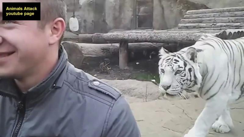Đừng bao giờ quay lưng lại với hổ và sư tử nếu không muốn hối hận cả đời