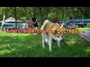 Фестиваль Собаки в городе 2019 г
