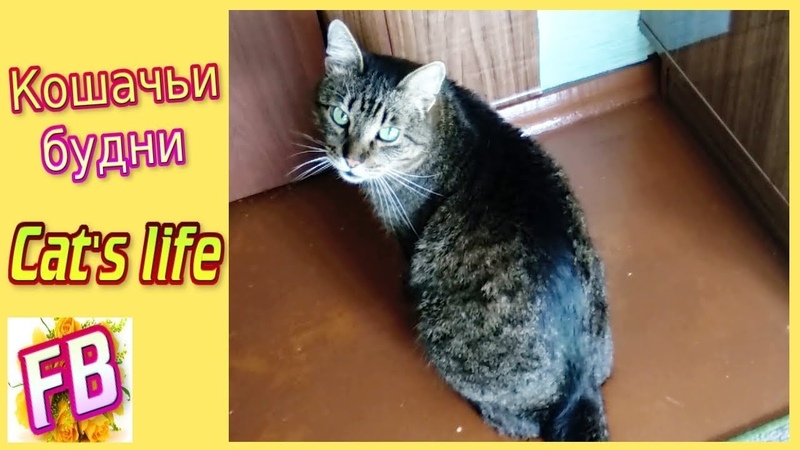 FB Cat life Кошачьи будни Малыш и кот Жулик Мега ласковый кот