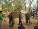 Снимаю слонят в Тайланде