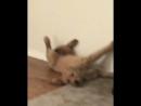 Пёс лежит у стены