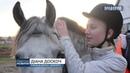 У ДЮКСШ «Фаворит» відбулися змагання з подолання перешкод верхи на конях