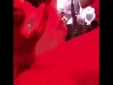 Выступление Никиты на свадьбе Юлии Паршута, ресторан