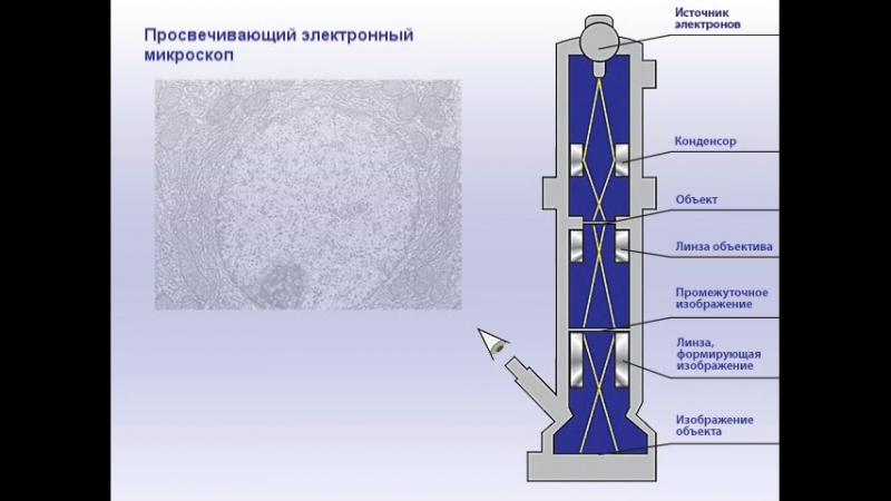 Виды электронных микроскопов и сравнение изображений, получаемых с их помощью