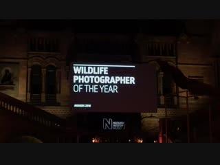 Wildlife Photografer of the year 2018. Прямой эфир. Все победители