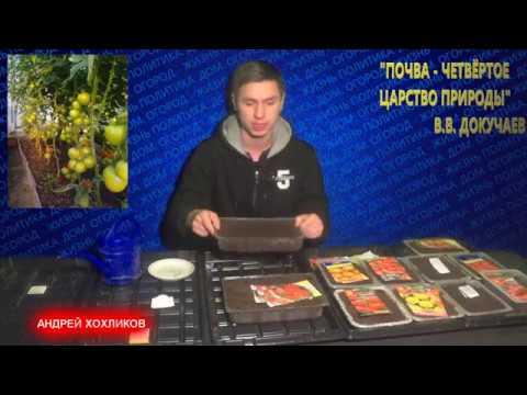 АНДРЕЙ ХОХЛИКОВ ВЫРАЩИВАНИЕ РАССАДЫ ТОМАТОВ посев томатов