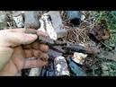 коп монет и поиск кладов по старой пруссии и немецкая свалка