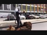 Wonerful Cosplay (Король-Лев-Дисней-Мультфильмы)