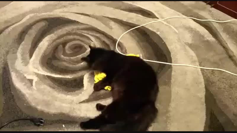 Кот играет с футболкой
