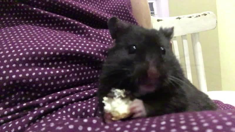 Дитрих кушает