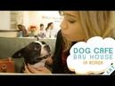 DOG CAFE | Bau House Dog Cafe in Korea