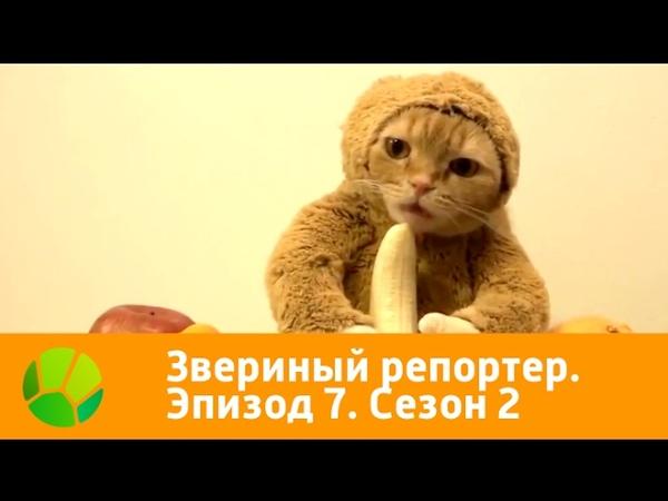 Звериный репортёр. Эпизод 7. Сезон 2 (2016)