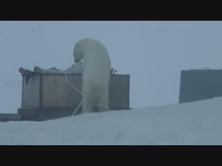 Белые медведи спровоцировали ЧС на Новой Земле | 9 февраля | Вечер | СОБЫТИЯ ДНЯ | ФАН-ТВ