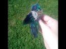 брошь птица