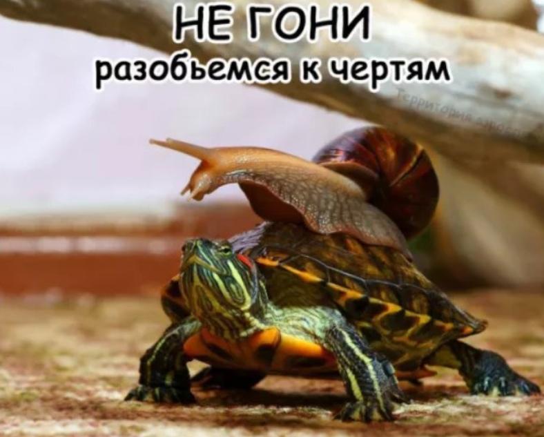 yxepaZd7plQ - Не гони!