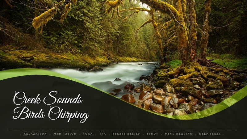 Soothing Creek Sounds Birds Chirping For Meditation | Nature Sounds | Birds Singing Water Sounds