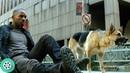 На Роберта и Сэм нападают зараженные собаки Я-легенда 2007 год