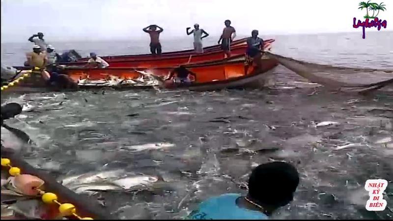 Lần đầu thấy họ kéo lưới mà thấy lạ | nhật ký đi biển 52