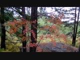 Прогулка по осеннему лесу. Колывань