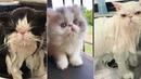 Grooming Cat - Bath Cat - Cute Cat Compilation 1