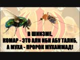 В шиизме, Пророк - есть муха, а Али ибн Абу Талиб - есть комаришка!