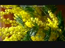 цветы под музыку ╰◕ С Днём Рождения В твой день рожденья цветы и поздравления Picrolla 240