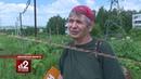 Борщевик Тысячи жертв опасного растения ЧАムСТОГ