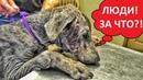 Измученный Доберман.Ужасное обращение с собакой.Ветеринарное ранчо ЗООЗАЩИТНИКИ