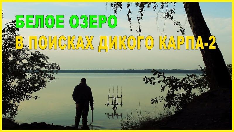 Ловля карпа на Белом Озере