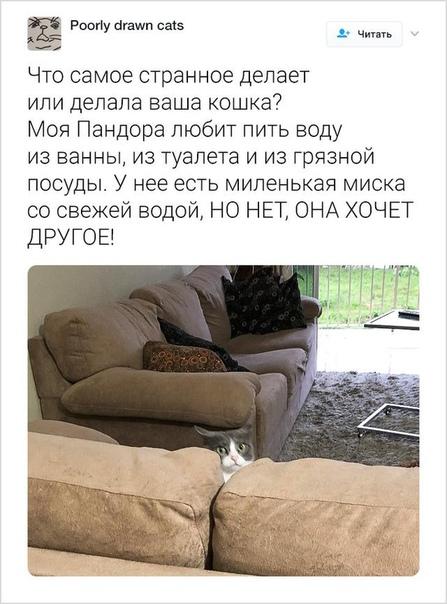 Пользователи твиттера рассказывают о странностях своих котов Неделю назад девушка из Бразилии создала тред, где предложила пользователям твиттера поделиться странностями, которые они замечали у