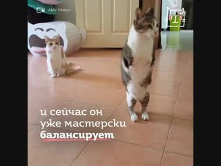 Котик без передних лап
