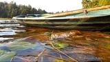 Звуки природы. Озеро. Релакс. ( Sound of nature. Lake. Relax. )