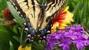 3950. Бабочки В мире животных