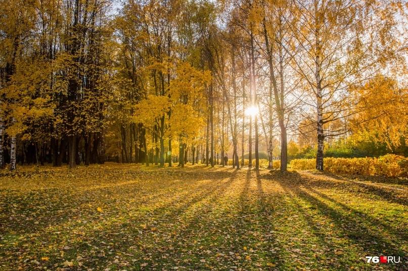 5b3ad118 Семь парков, в которых ещё можно успеть погулять в золотую осень. Погода  подарила нам еще несколько отличных ...