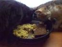 Dinner for my cats mayonnaise barley porridge with peas shawarma